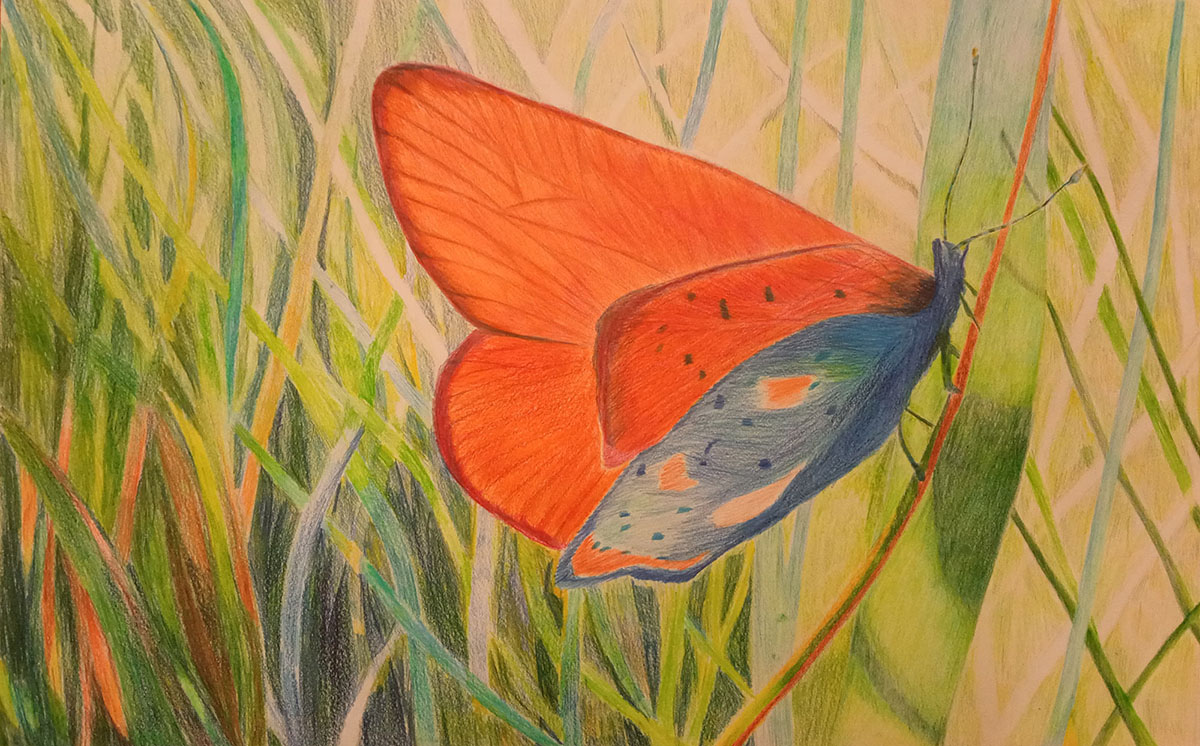 Praca konkursowa przedstawiająca motyla wśród trawy, autorem rysunku jest Maria Ornal